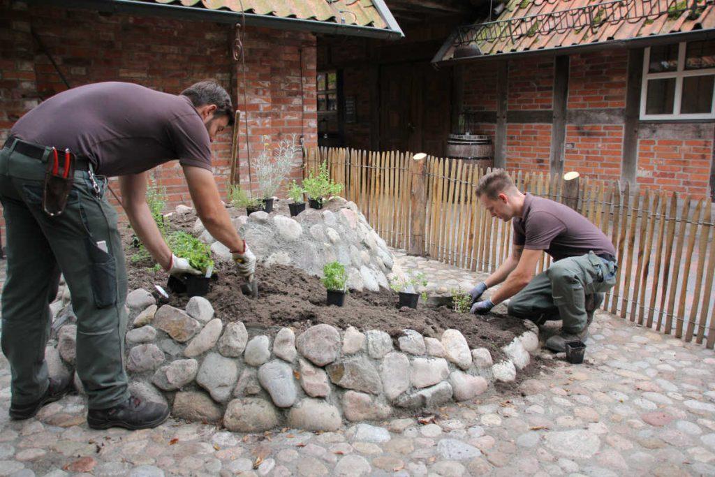 Die Kräuterspirale vom Hoflokal wird bepflanzt